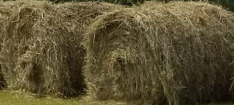 5x4 regular mixed grass hay